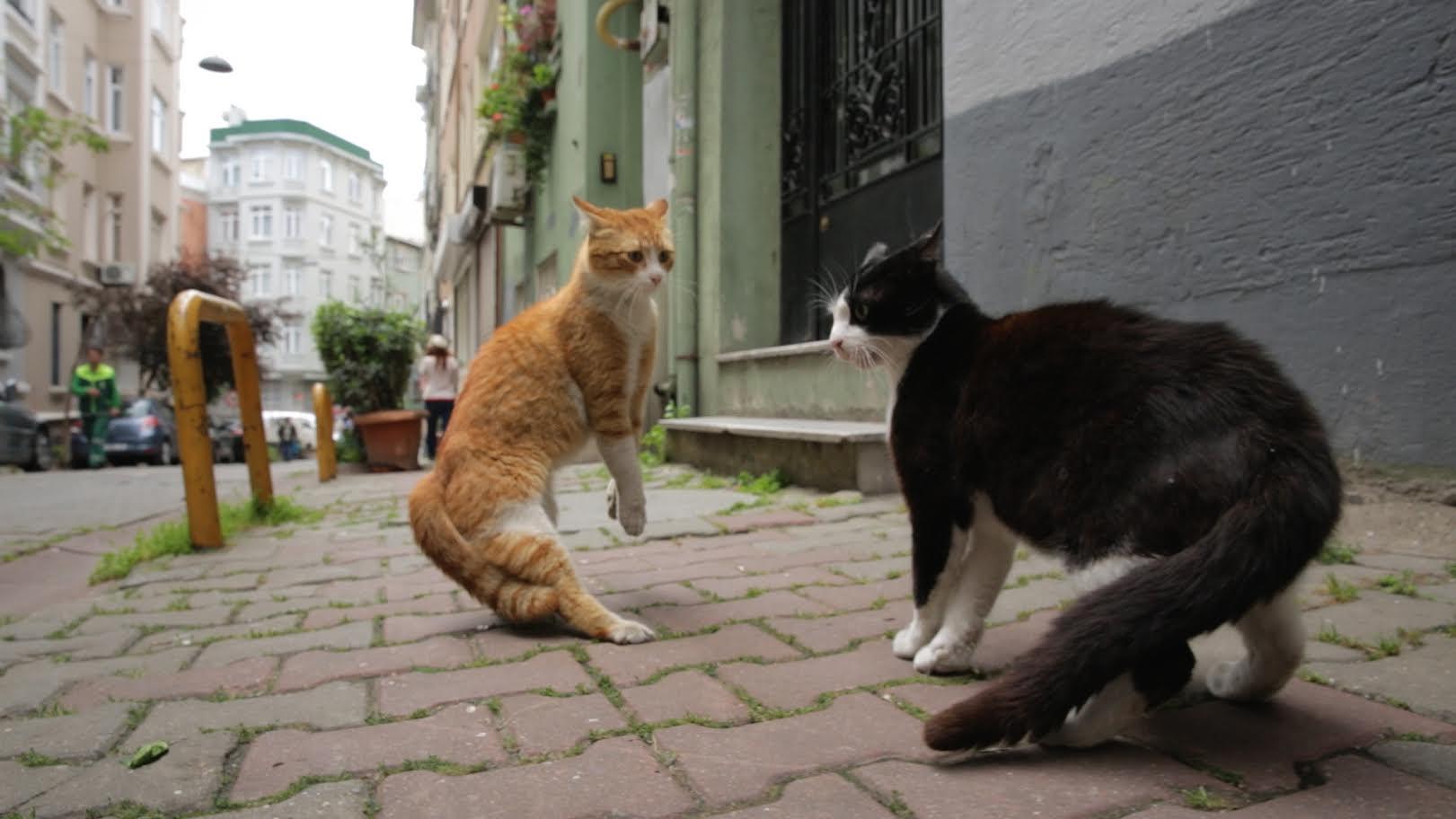 """Kedilerin Gücü Adına: """"Kediler İnsanları Nasıl Birleştirir?"""""""